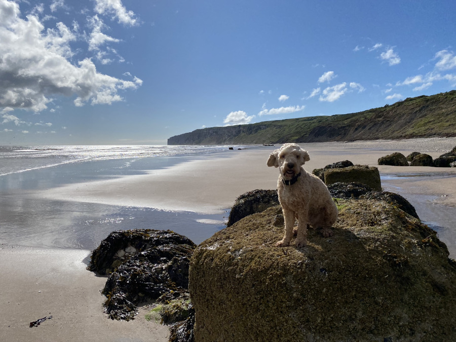 Dog Friendly Filey in Yorkshire UK